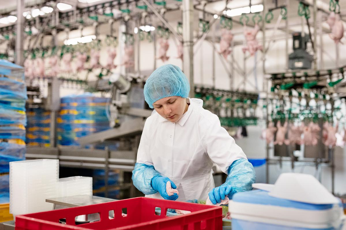 """""""Putnu fabrikā Ķekava"""" strādnieki nopelna vidēji 600 eiro uz rokas, bet tik un tā darbinieku trūkst. Foto: Reinis Hofmanis (rebaltica.lv)"""