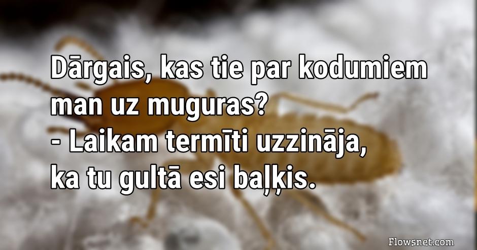 TU GULTĀ ESI BAĻĶIS..