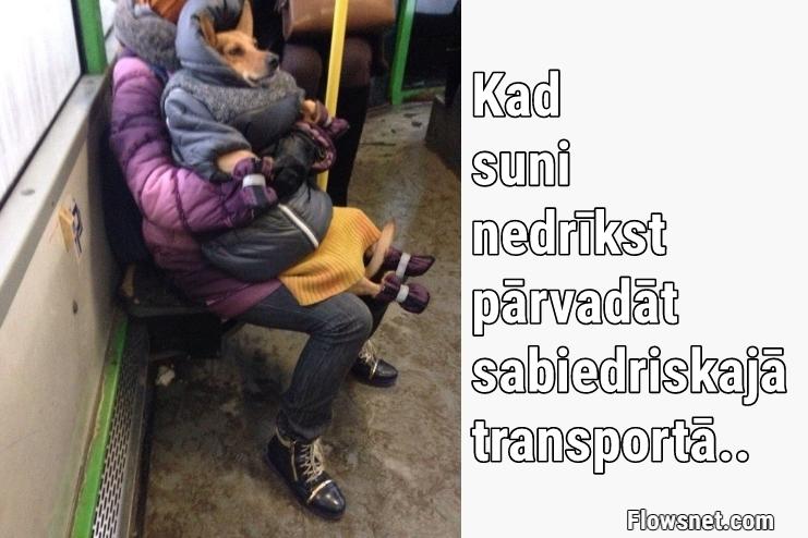 TAD, KAD SUNI NEDRĪKST PĀRVADĀT SABIEDRISKAJĀ TRANSPORTĀ..