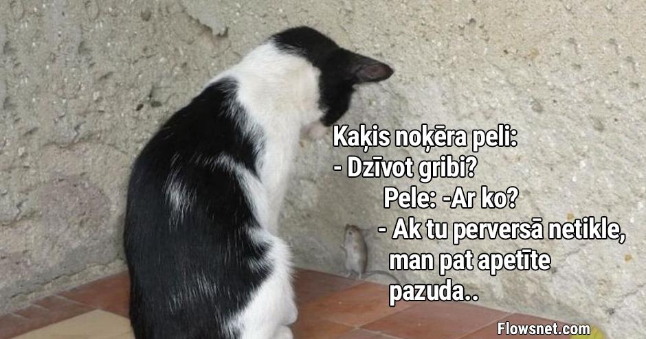KAĶA UN PELES SARUNA..
