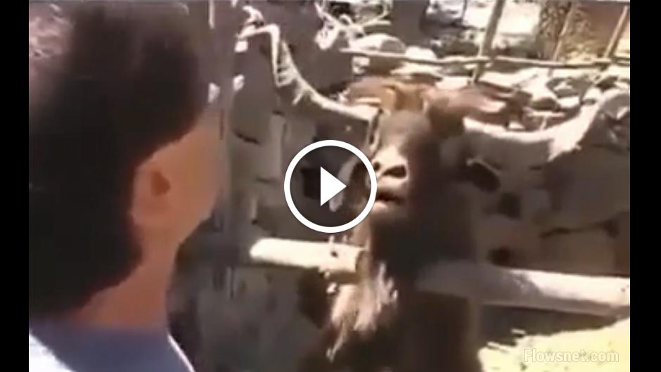 VIDEO: TAD, KAD JANKA TEVI NESAPROT..