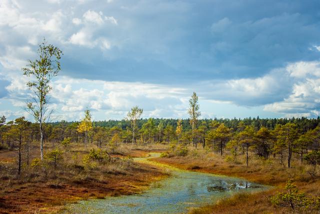 Latvia-Swamp.jpg